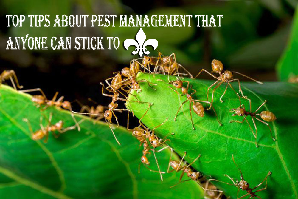 Top Tips About Pest Management That Anyone Can Stick to