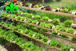 What You Ought to Learn About Natural and organic Garden