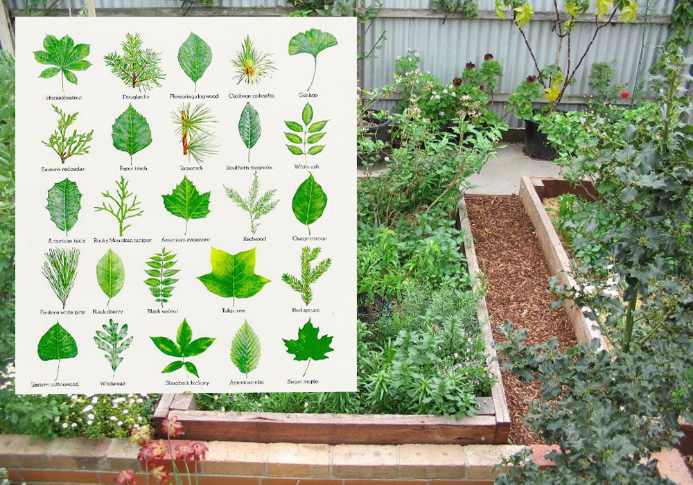 Gardening Plants – The Aesthetic Worth Of Herbs