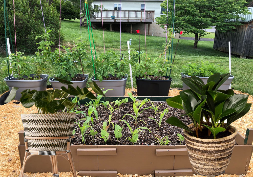 Getting Started With Gardening
